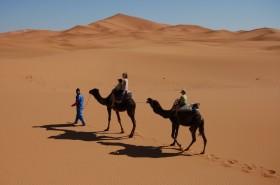 camel-trek-erg-chebbi